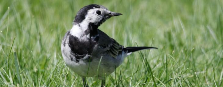 Trådgalgar för fågelmat i trädgården